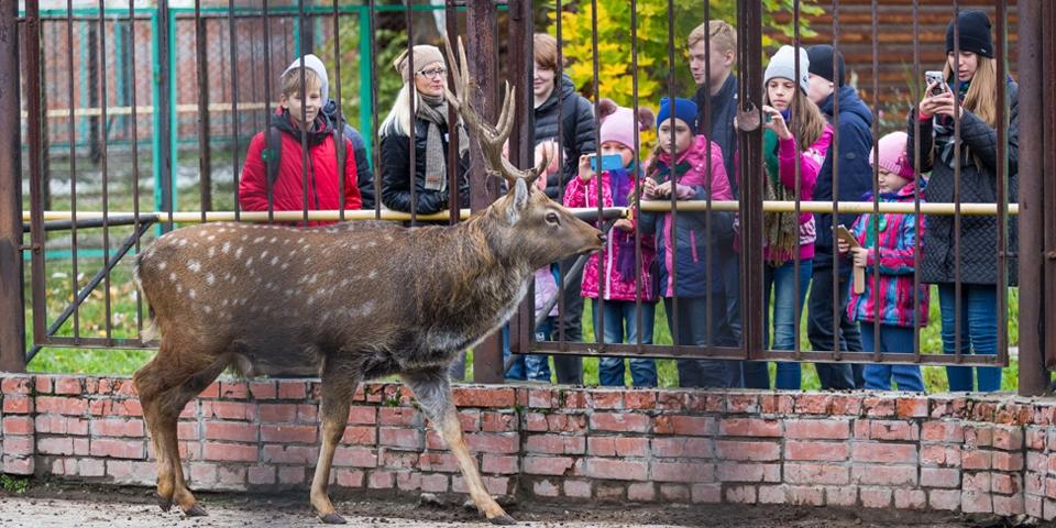 Сегодня главные посетители северского зоопарка— дети
